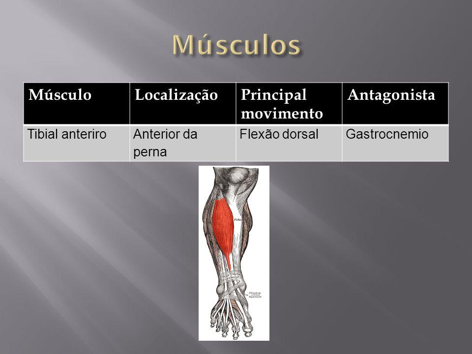 MúsculoLocalizaçãoPrincipal movimento Antagonista Tibial anteriroAnterior da perna Flexão dorsalGastrocnemio