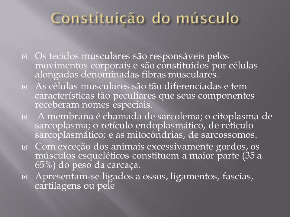  Os tecidos musculares são responsáveis pelos movimentos corporais e são constituídos por células alongadas denominadas fibras musculares.