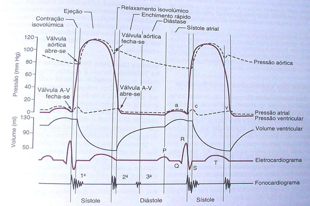 Inervação das células miocárdicas Tipo vel cond(m/s) ativ marca passo inerv.