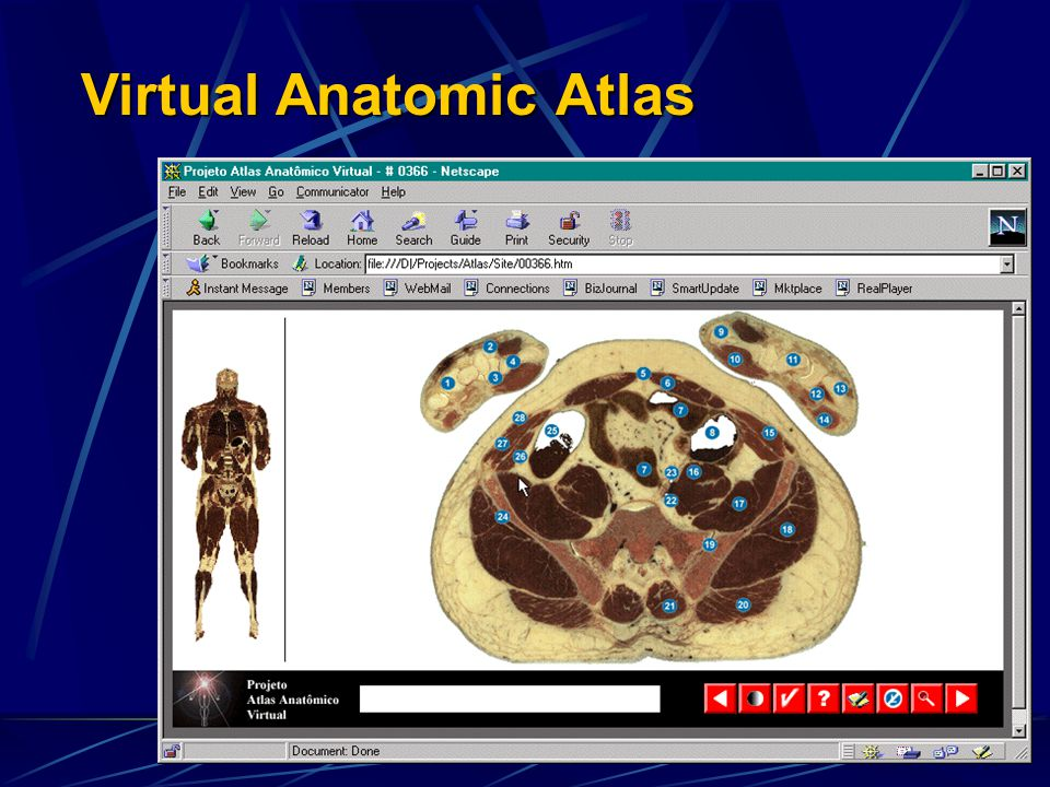Virtual Anatomic Atlas