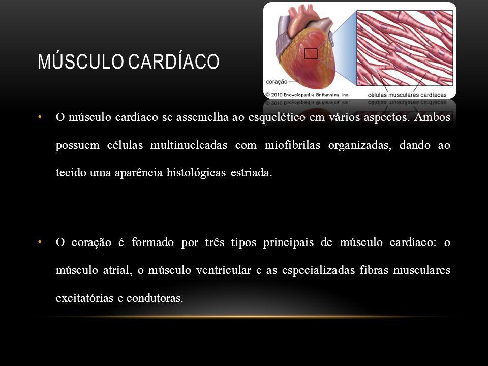MÚSCULO CARDÍACO O músculo cardíaco se assemelha ao esquelético em vários aspectos. Ambos possuem células multinucleadas com miofibrilas organizadas,