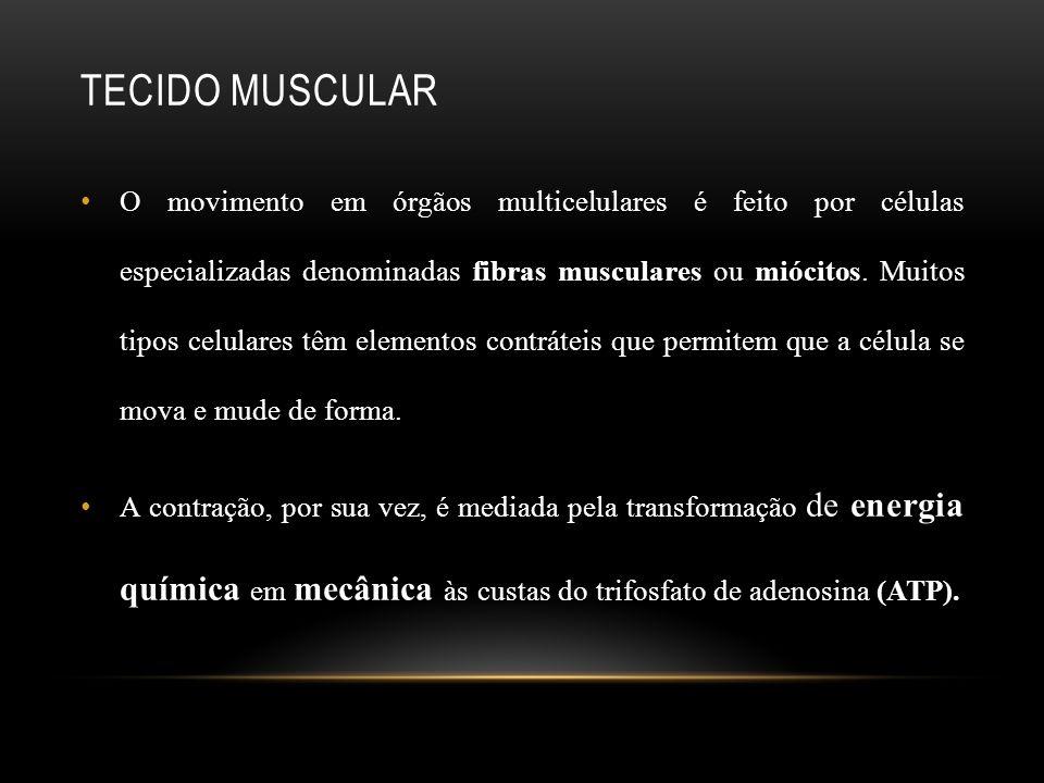 TECIDO MUSCULAR O movimento em órgãos multicelulares é feito por células especializadas denominadas fibras musculares ou miócitos. Muitos tipos celula