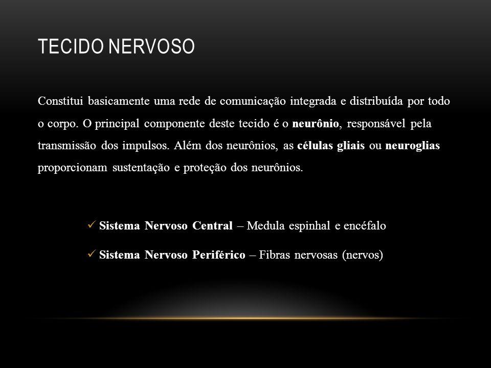 TECIDO NERVOSO Constitui basicamente uma rede de comunicação integrada e distribuída por todo o corpo. O principal componente deste tecido é o neurôni