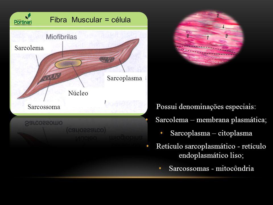 Possui denominações especiais: Sarcolema – membrana plasmática; Sarcoplasma – citoplasma Retículo sarcoplasmático - retículo endoplasmático liso; Sarc