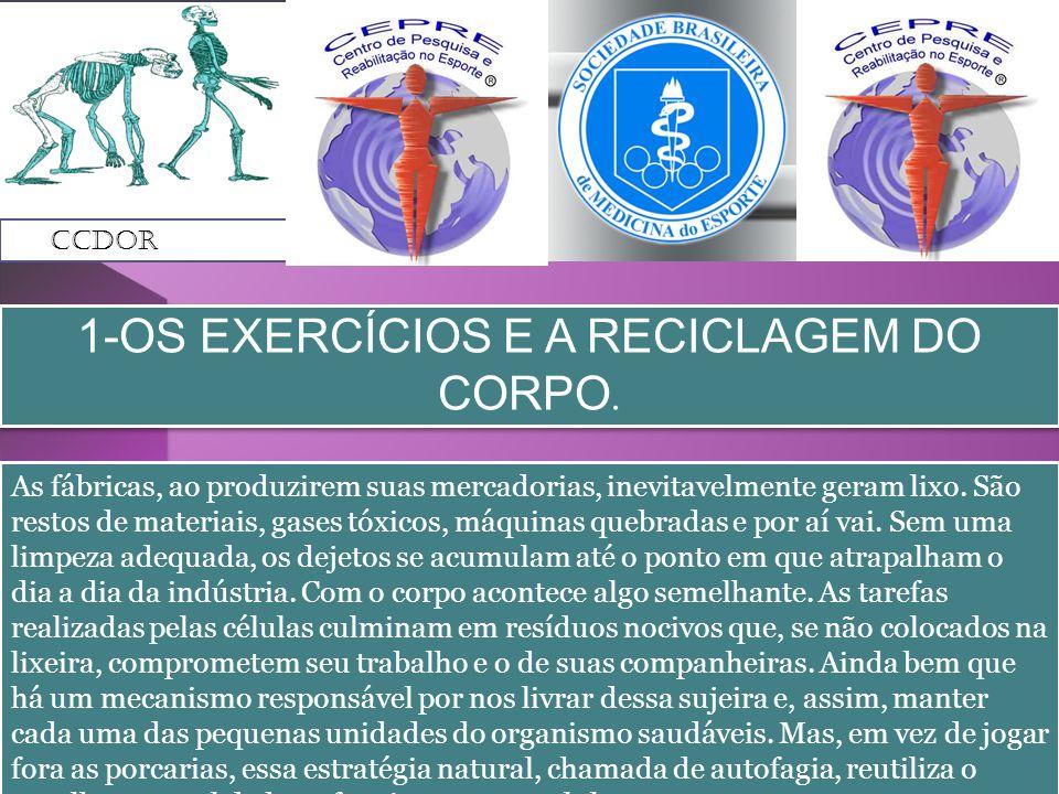 1-OS EXERCÍCIOS E A RECICLAGEM DO CORPO.