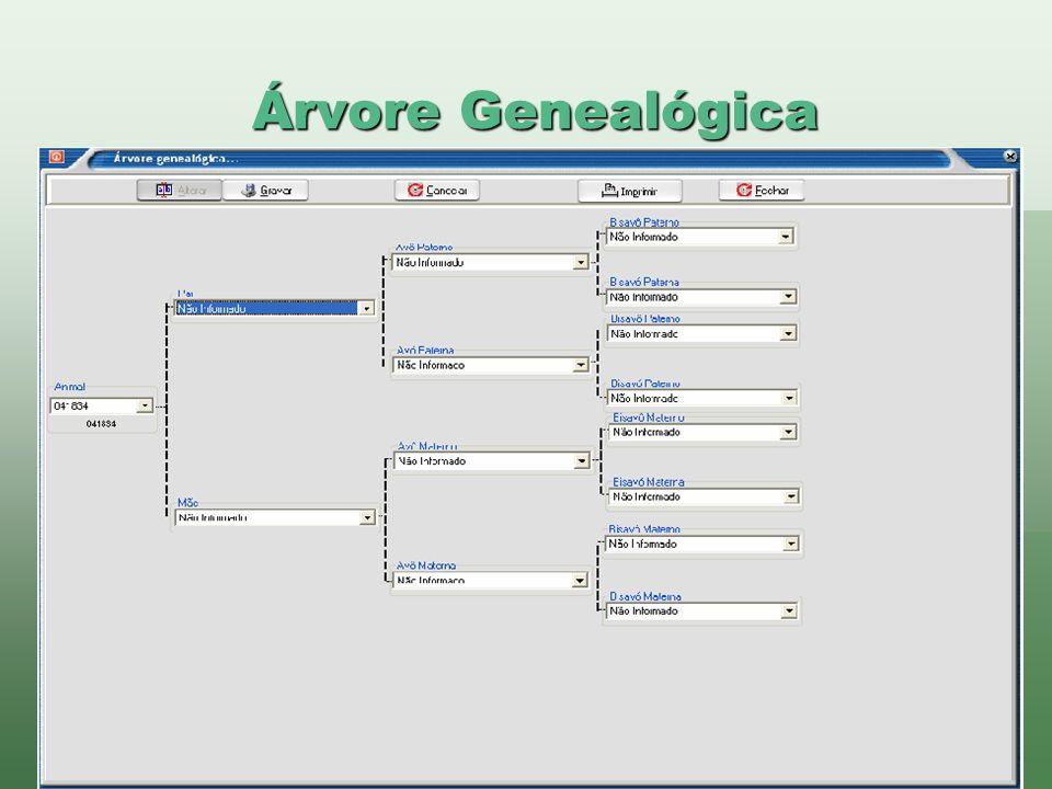 www.brazsoft.com.br (65) 3023 9013 Árvore Genealógica