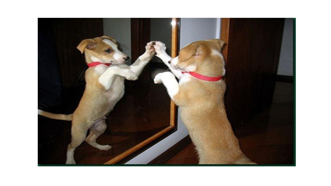 Características das imagens nos espelhos esféricos As características das imagens nos espelhos esféricos mudam de acordo com quando mudamos a posição do objeto na frente do espelho.