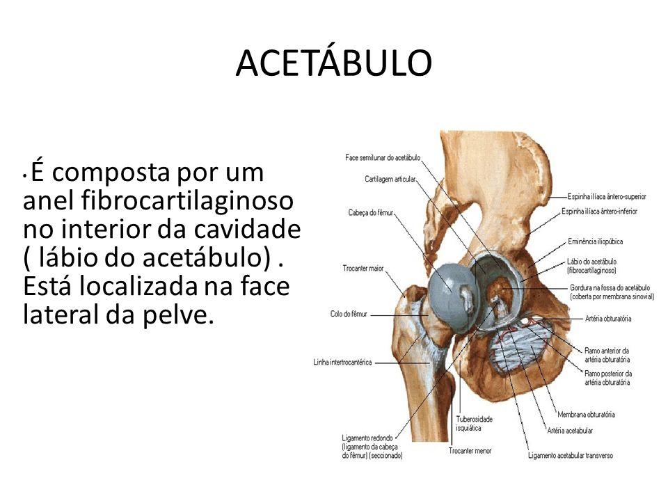 ACETÁBULO É composta por um anel fibrocartilaginoso no interior da cavidade ( lábio do acetábulo). Está localizada na face lateral da pelve.