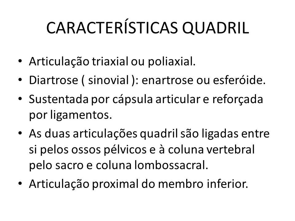 CARACTERÍSTICAS QUADRIL Articulação triaxial ou poliaxial. Diartrose ( sinovial ): enartrose ou esferóide. Sustentada por cápsula articular e reforçad