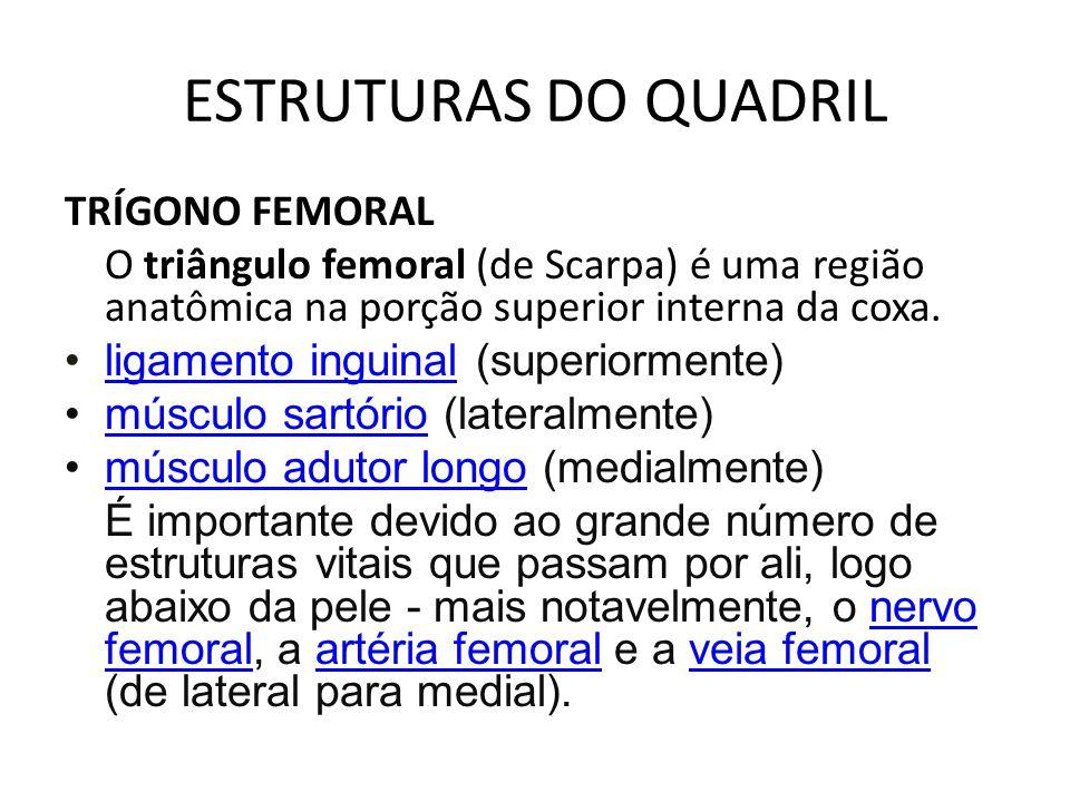 ESTRUTURAS DO QUADRIL TRÍGONO FEMORAL O triângulo femoral (de Scarpa) é uma região anatômica na porção superior interna da coxa. ligamento inguinal (s
