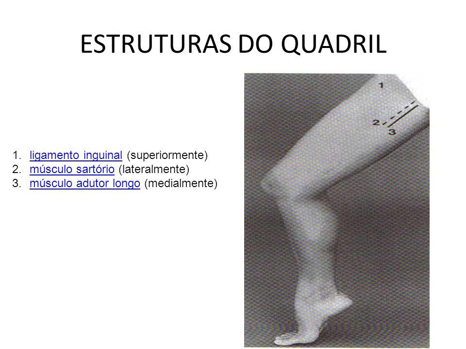 ESTRUTURAS DO QUADRIL 1.ligamento inguinal (superiormente)ligamento inguinal 2.músculo sartório (lateralmente)músculo sartório 3.músculo adutor longo