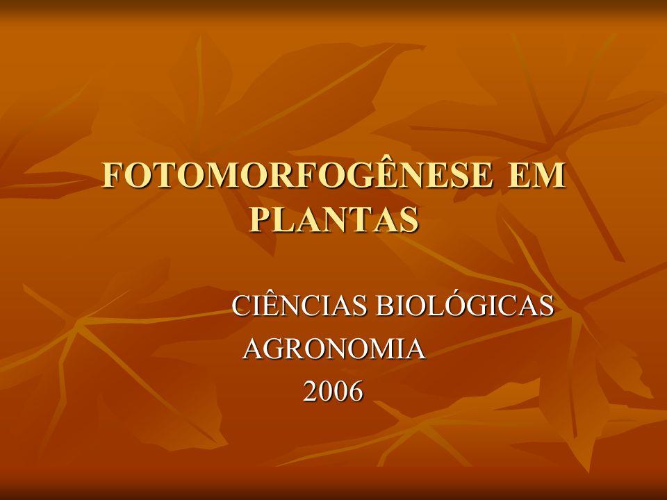 FOTOMORFOGÊNESE EM PLANTAS CIÊNCIAS BIOLÓGICAS CIÊNCIAS BIOLÓGICASAGRONOMIA2006