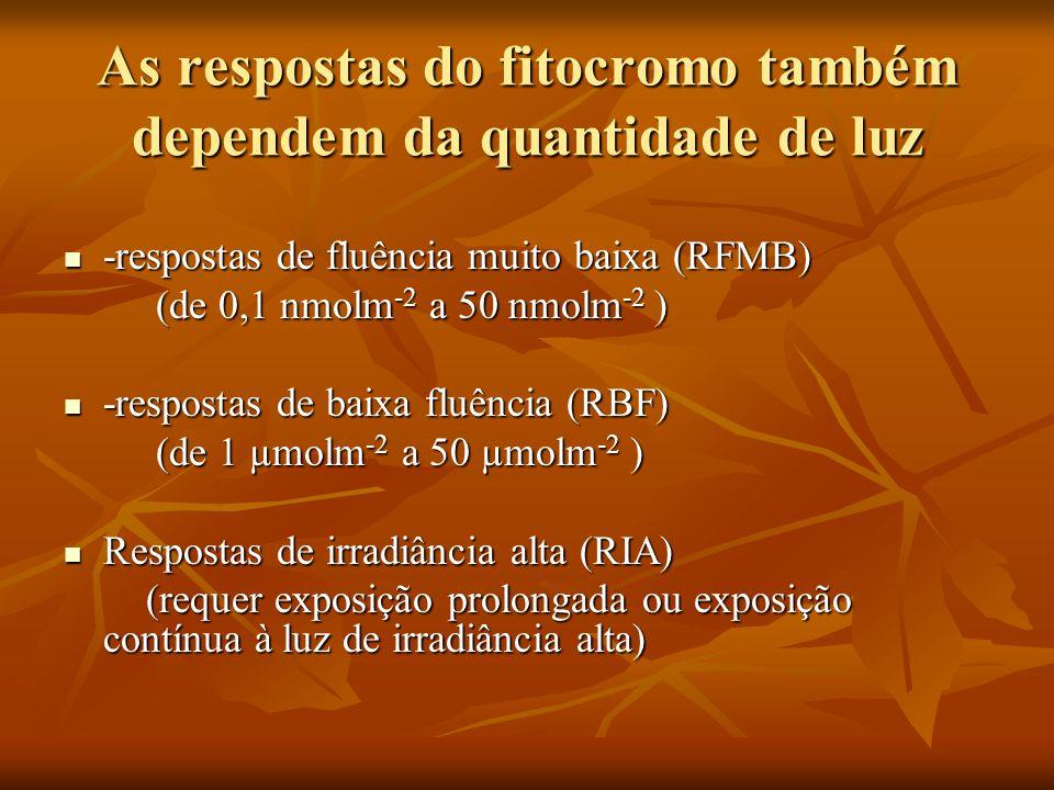 As respostas do fitocromo também dependem da quantidade de luz -respostas de fluência muito baixa (RFMB) -respostas de fluência muito baixa (RFMB) (de