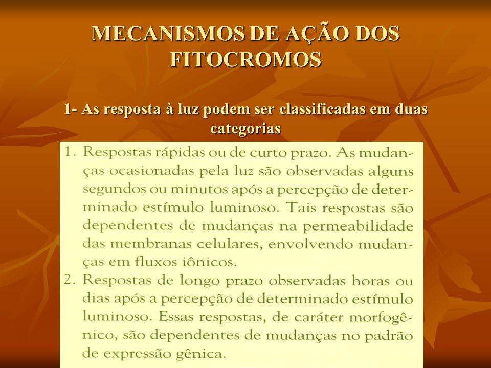 MECANISMOS DE AÇÃO DOS FITOCROMOS 1- As resposta à luz podem ser classificadas em duas categorias