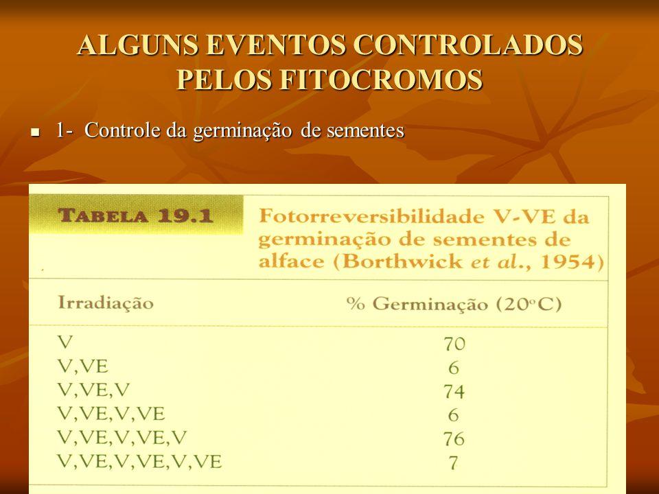 ALGUNS EVENTOS CONTROLADOS PELOS FITOCROMOS 1- Controle da germinação de sementes 1- Controle da germinação de sementes