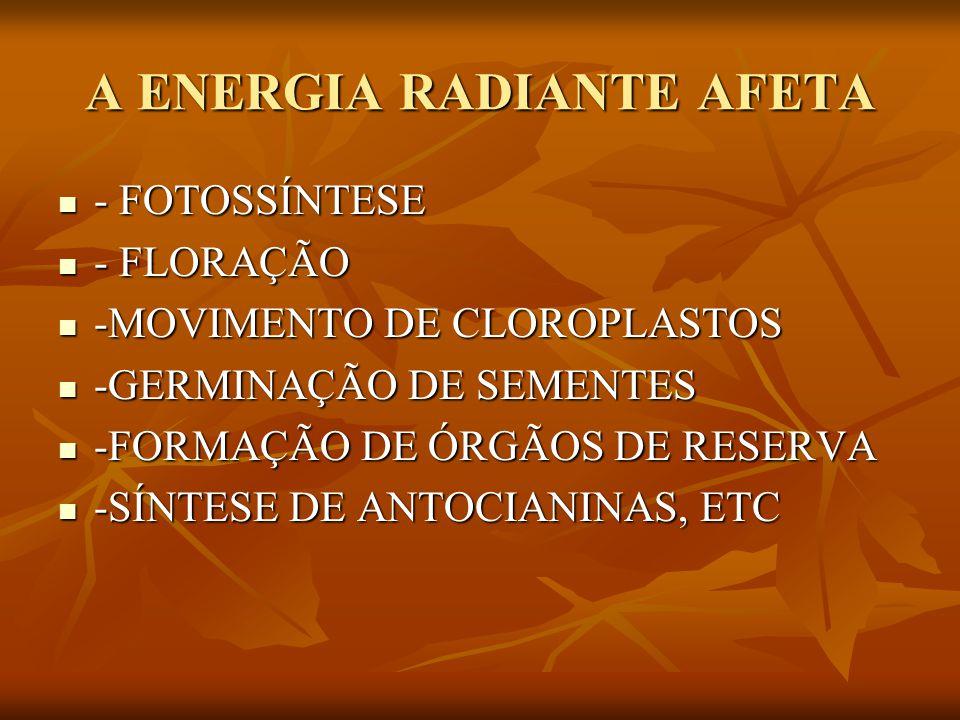 A ENERGIA RADIANTE AFETA - FOTOSSÍNTESE - FOTOSSÍNTESE - FLORAÇÃO - FLORAÇÃO -MOVIMENTO DE CLOROPLASTOS -MOVIMENTO DE CLOROPLASTOS -GERMINAÇÃO DE SEME