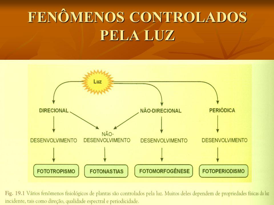FENÔMENOS CONTROLADOS PELA LUZ