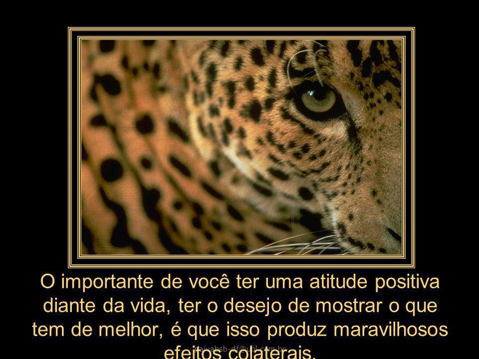 paivabsb-df@uol.com.br A felicidade é um perfume que você não pode passar nos outros, sem que o cheiro fique um pouco em suas mãos.