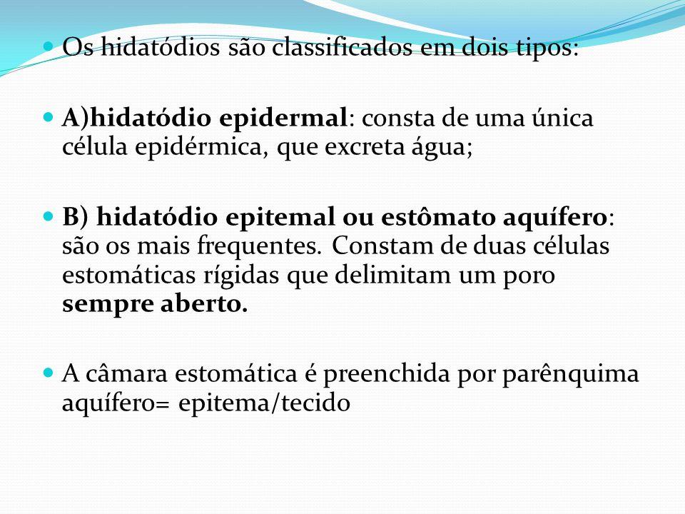 Os hidatódios são classificados em dois tipos: A)hidatódio epidermal: consta de uma única célula epidérmica, que excreta água; B) hidatódio epitemal ou estômato aquífero: são os mais frequentes.