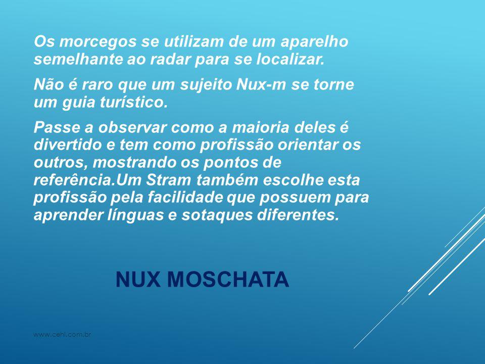 NUX MOSCHATA Os morcegos se utilizam de um aparelho semelhante ao radar para se localizar. Não é raro que um sujeito Nux-m se torne um guia turístico.