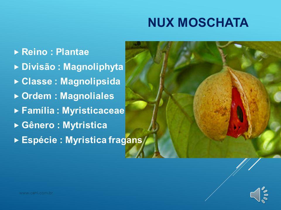 NUX MOSCHATA  Reino : Plantae  Divisão : Magnoliphyta  Classe : Magnolipsida  Ordem : Magnoliales  Família : Myristicaceae  Gênero : Mytristica