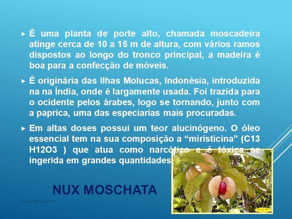 NUX MOSCHATA  É uma planta de porte alto, chamada moscadeira atinge cerca de 10 a 15 m de altura, com vários ramos dispostos ao longo do tronco princ