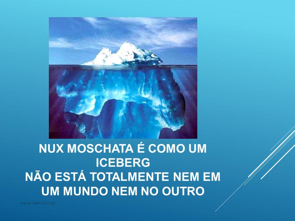 NUX MOSCHATA É COMO UM ICEBERG NÃO ESTÁ TOTALMENTE NEM EM UM MUNDO NEM NO OUTRO www.cehl.com.br