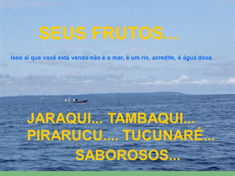 AIIIIII... RIO NEGRO E SOLIMÕES... SEU HABITAT É ENCANTADOR...