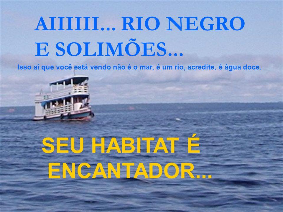 AFLORANDO NA AMAZÔNIA!!! Isso aí que você está vendo não é o mar, é um rio, acredite, é água doce.