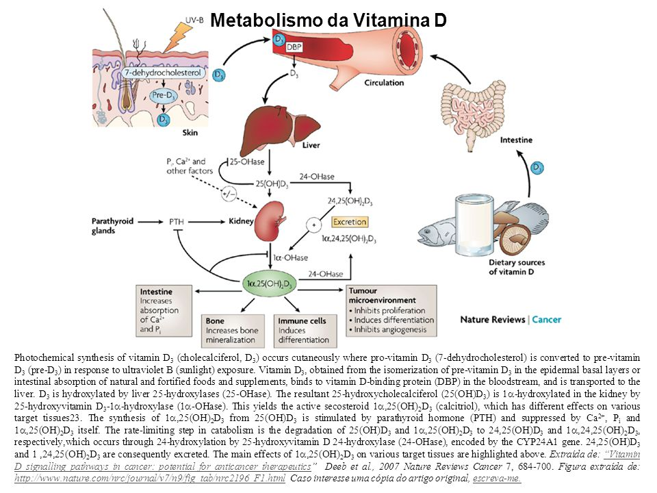 Metabolismo da Vitamina D Photochemical synthesis of vitamin D 3 (cholecalciferol, D 3 ) occurs cutaneously where pro-vitamin D 3 (7-dehydrocholesterol) is converted to pre-vitamin D 3 (pre-D 3 ) in response to ultraviolet B (sunlight) exposure.