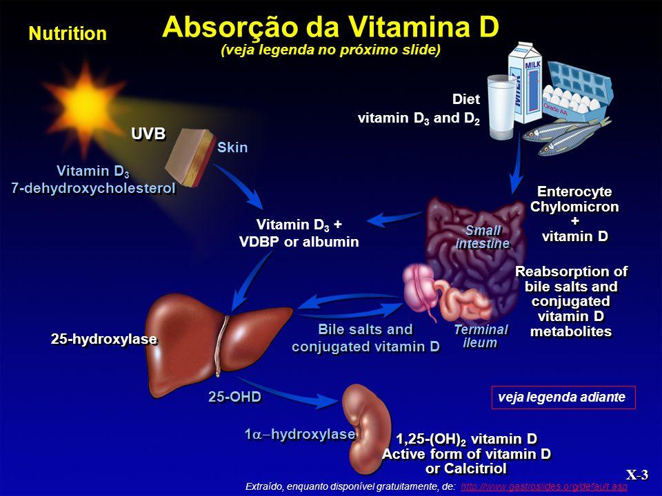Nutrition X-3 Diet vitamin D 3 and D 2 Vitamin D 3 7-dehydroxycholesterol Vitamin D 3 7-dehydroxycholesterol UVB Vitamin D 3 + VDBP or albumin Enteroc