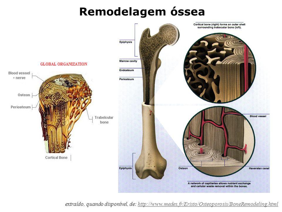 Alguns conceitos sobre fisiologia do tecido ósseo extraído, quando disponível, de: http://www.medes.fr/Eristo/Osteoporosis/BoneRemodeling.htmlhttp://w