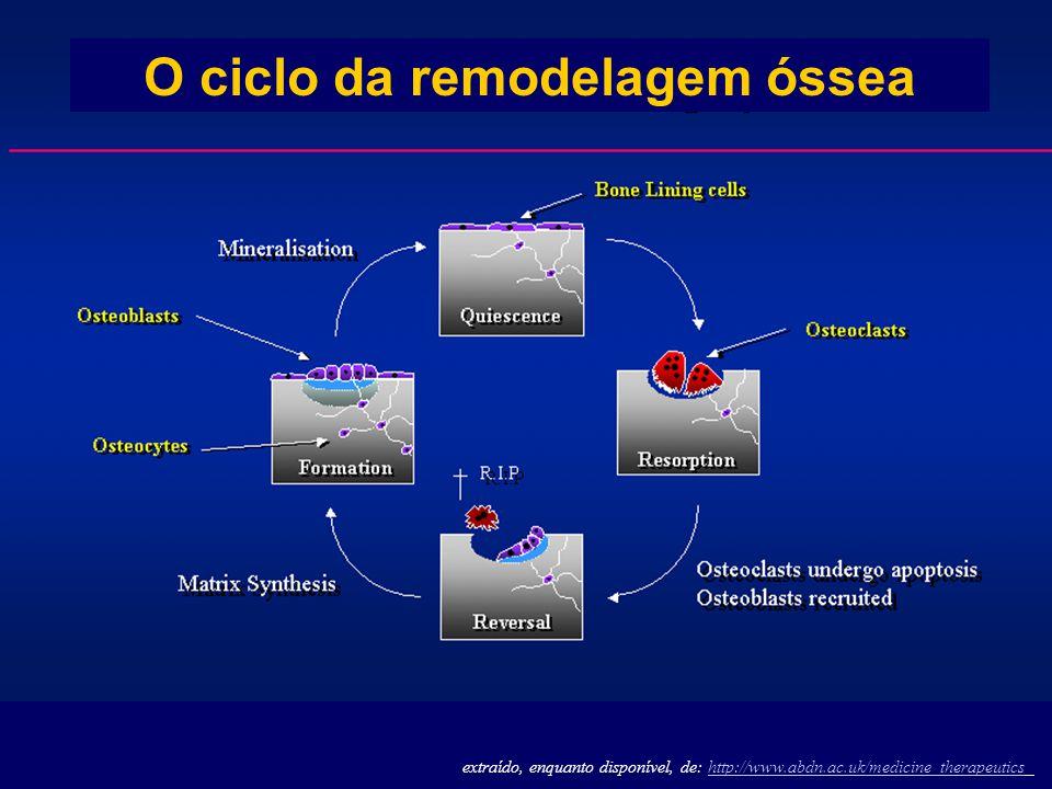 extraído, enquanto disponível, de: http://www.abdn.ac.uk/medicine_therapeuticshttp://www.abdn.ac.uk/medicine_therapeutics O ciclo da remodelagem óssea