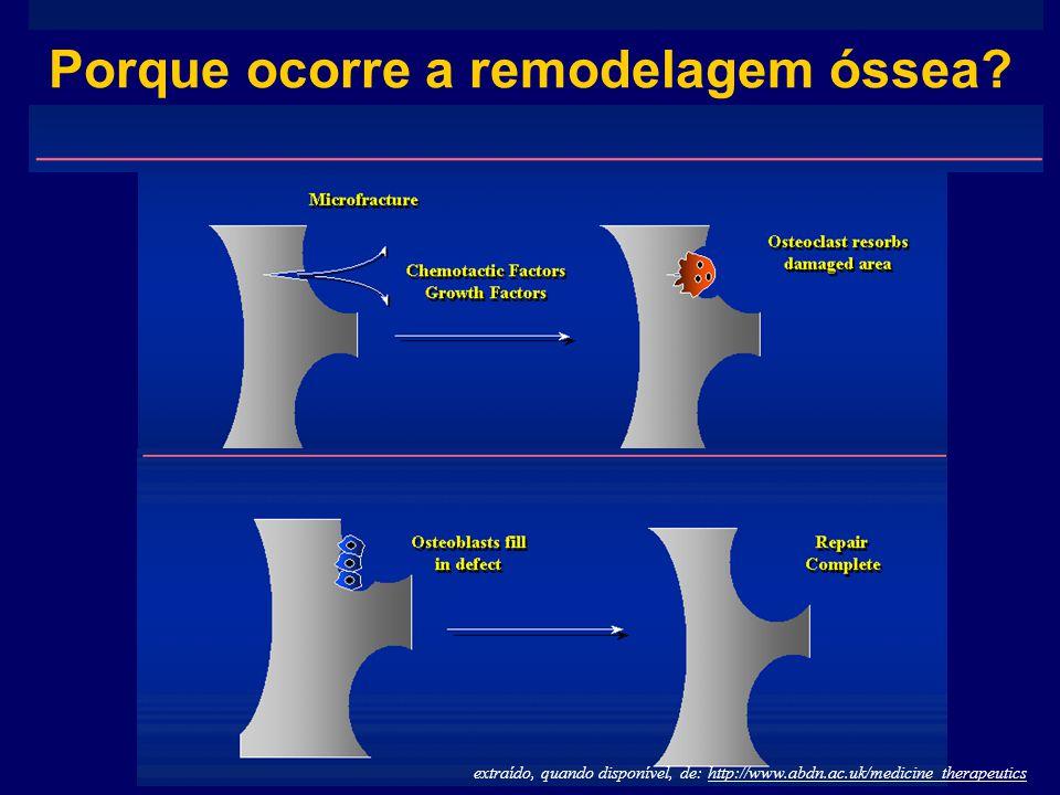 extraído, quando disponível, de: http://www.abdn.ac.uk/medicine_therapeutics Porque ocorre a remodelagem óssea?
