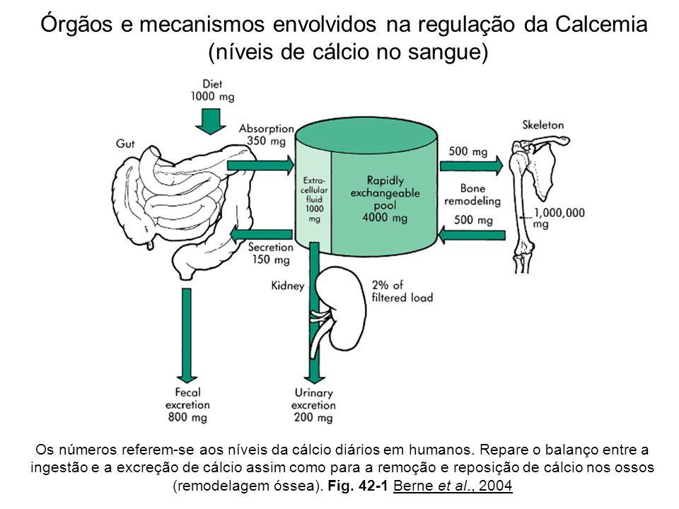 Os números referem-se aos níveis da cálcio diários em humanos. Repare o balanço entre a ingestão e a excreção de cálcio assim como para a remoção e re