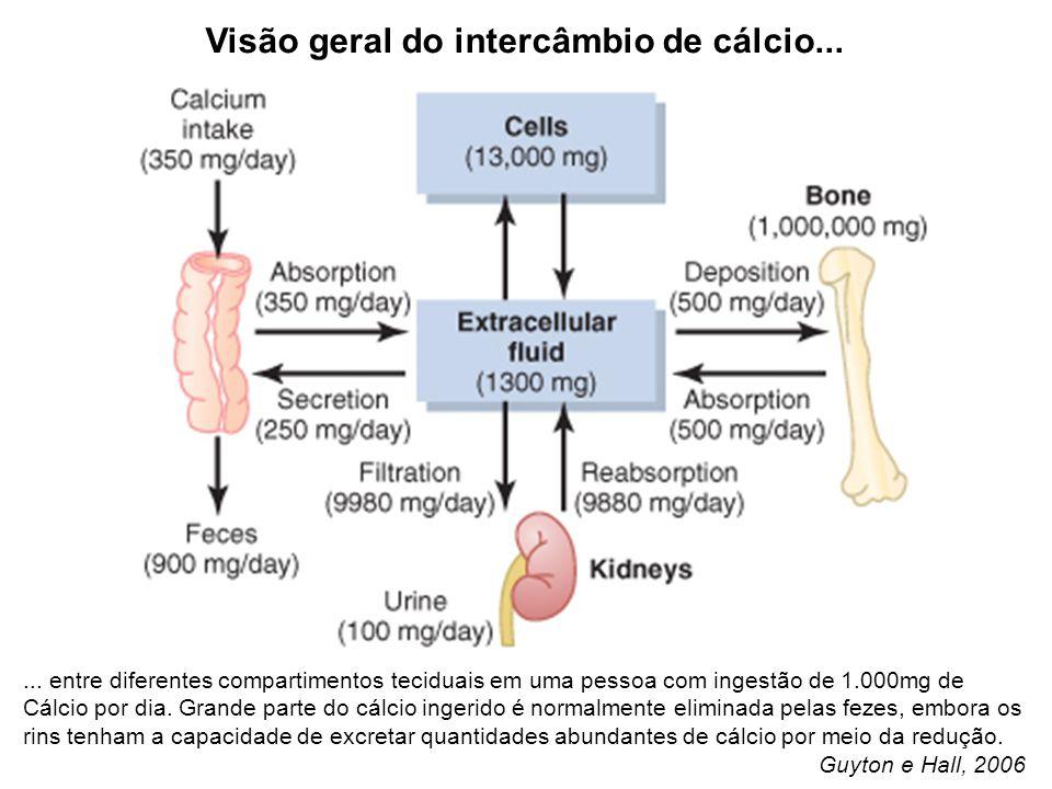 Visão geral do intercâmbio de cálcio...... entre diferentes compartimentos teciduais em uma pessoa com ingestão de 1.000mg de Cálcio por dia. Grande p