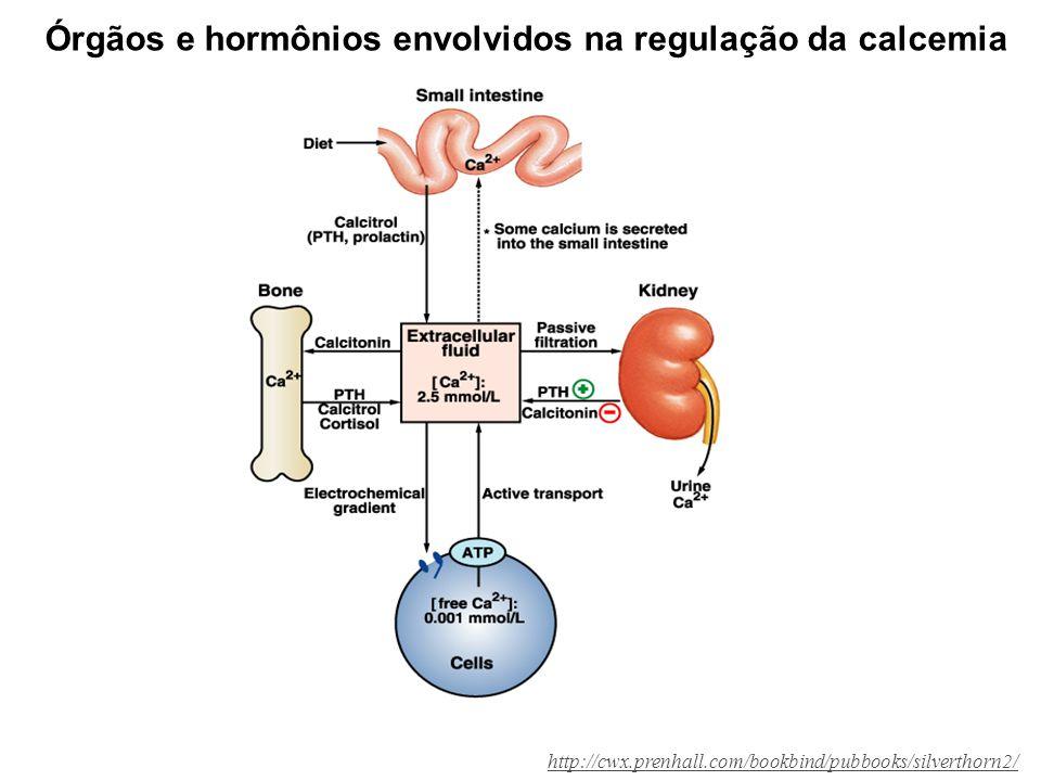Órgãos e hormônios envolvidos na regulação da calcemia http://cwx.prenhall.com/bookbind/pubbooks/silverthorn2/