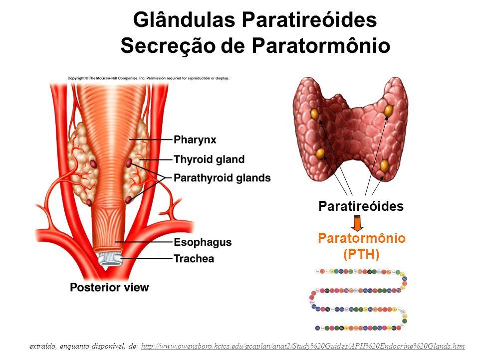 http://cwx.prenhall.com/bookbind/pubbooks/silverthorn2/ Regulação da calcemia pelo Paratormônio (PTH)