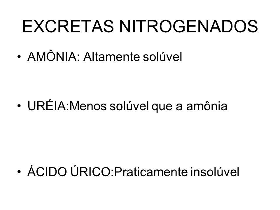 EXCRETAS NITROGENADOS AMÔNIA: Altamente solúvel URÉIA:Menos solúvel que a amônia ÁCIDO ÚRICO:Praticamente insolúvel