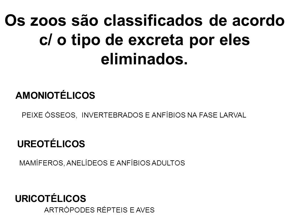 CICLO DA ORNITINA Amônia + Gás Carbônico  Uréia + Água Ornitina  Citrulina  Arginina