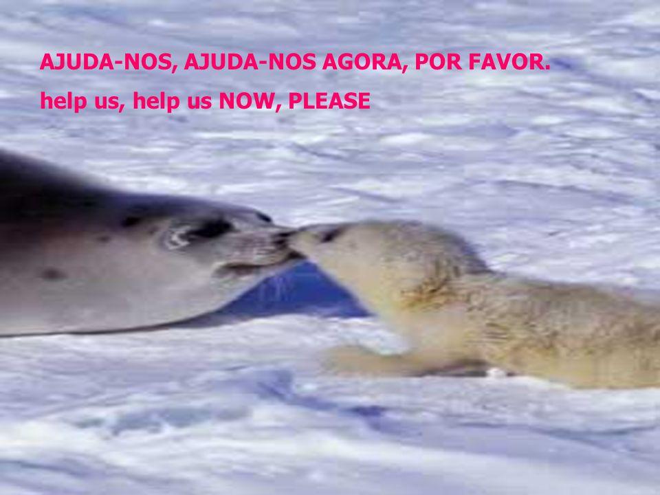 AJUDA-NOS, AJUDA-NOS AGORA, POR FAVOR. help us, help us NOW, PLEASE