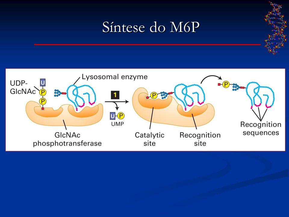 Síntese do M6P