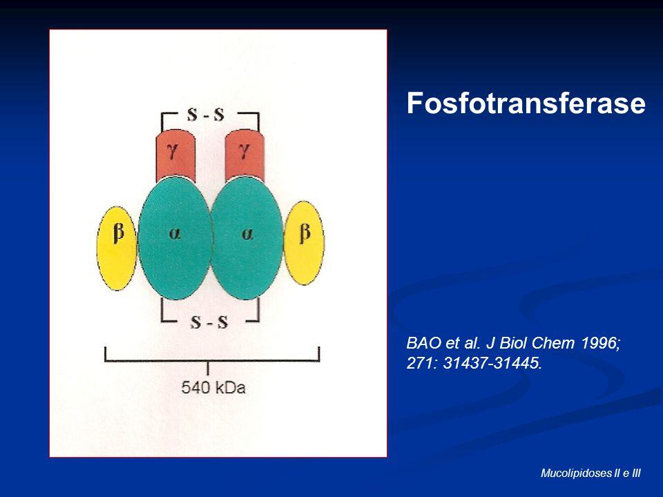 Fosfotransferase BAO et al. J Biol Chem 1996; 271: 31437-31445. Mucolipidoses II e III