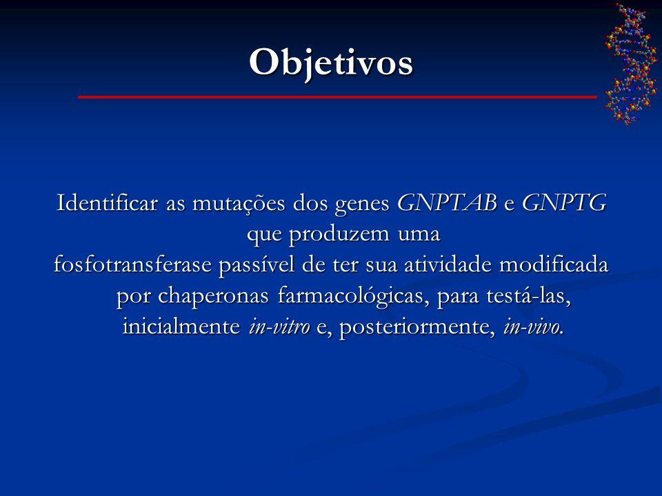 Objetivos Identificar as mutações dos genes GNPTAB e GNPTG que produzem uma fosfotransferase passível de ter sua atividade modificada por chaperonas f