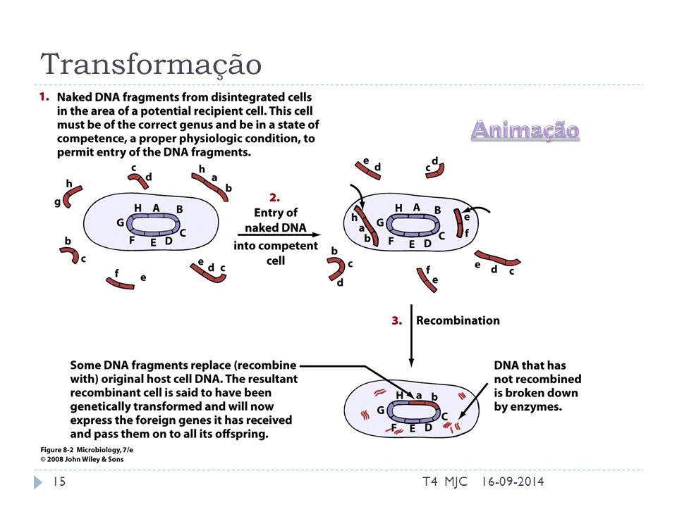 Transformação 16-09-2014T4 MJC15