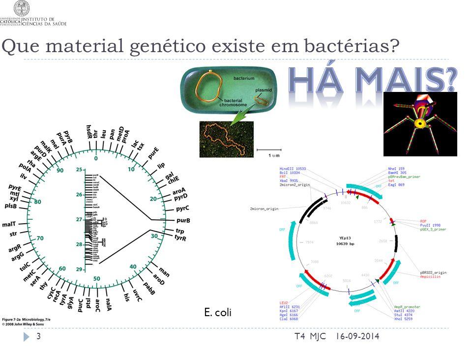 Que material genético existe em bactérias? 16-09-2014T4 MJC3 E. coli