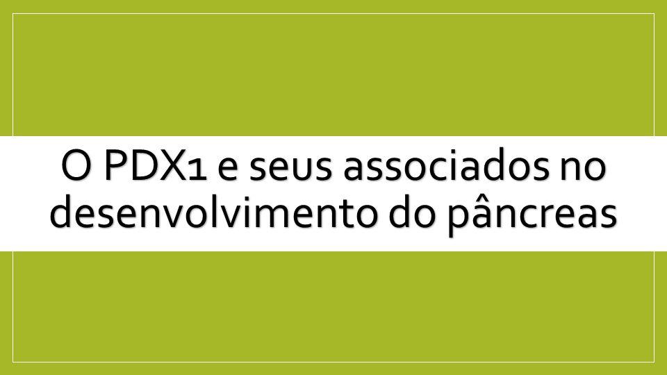 O QUE É O PDX1.