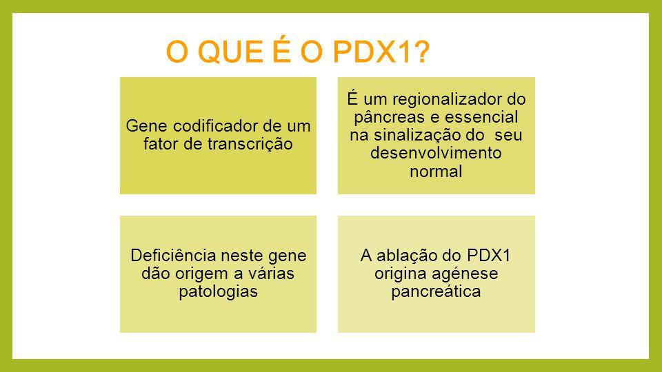 Alvos e co-expressores do PDXI PTF1A NOTCH NGN3 PAX 4 e 6 NKx Maf Mib-1 MNX-1 LBL-11/ISL-1 KRAS miRNA-375 p27 GATA