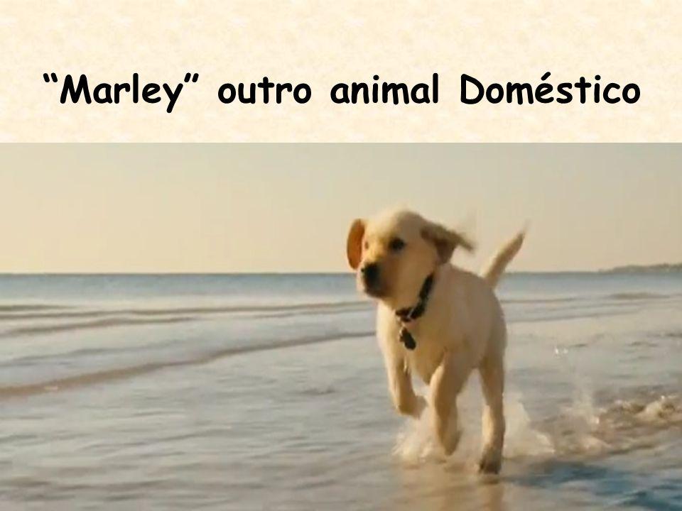 """Marley"" outro animal Doméstico"