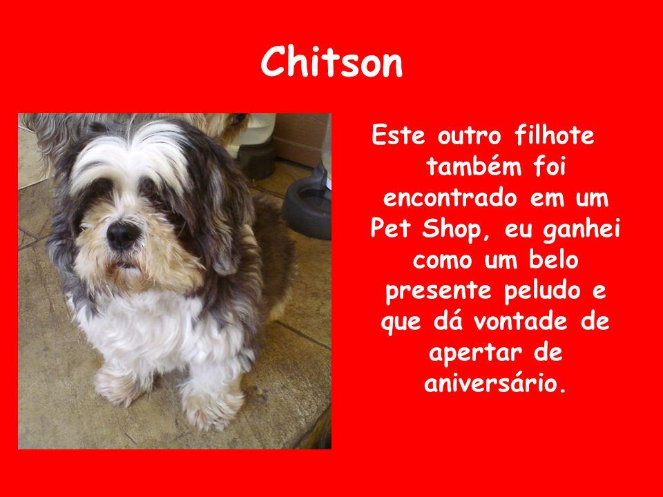 Chitson Este outro filhote também foi encontrado em um Pet Shop, eu ganhei como um belo presente peludo e que dá vontade de apertar de aniversário.